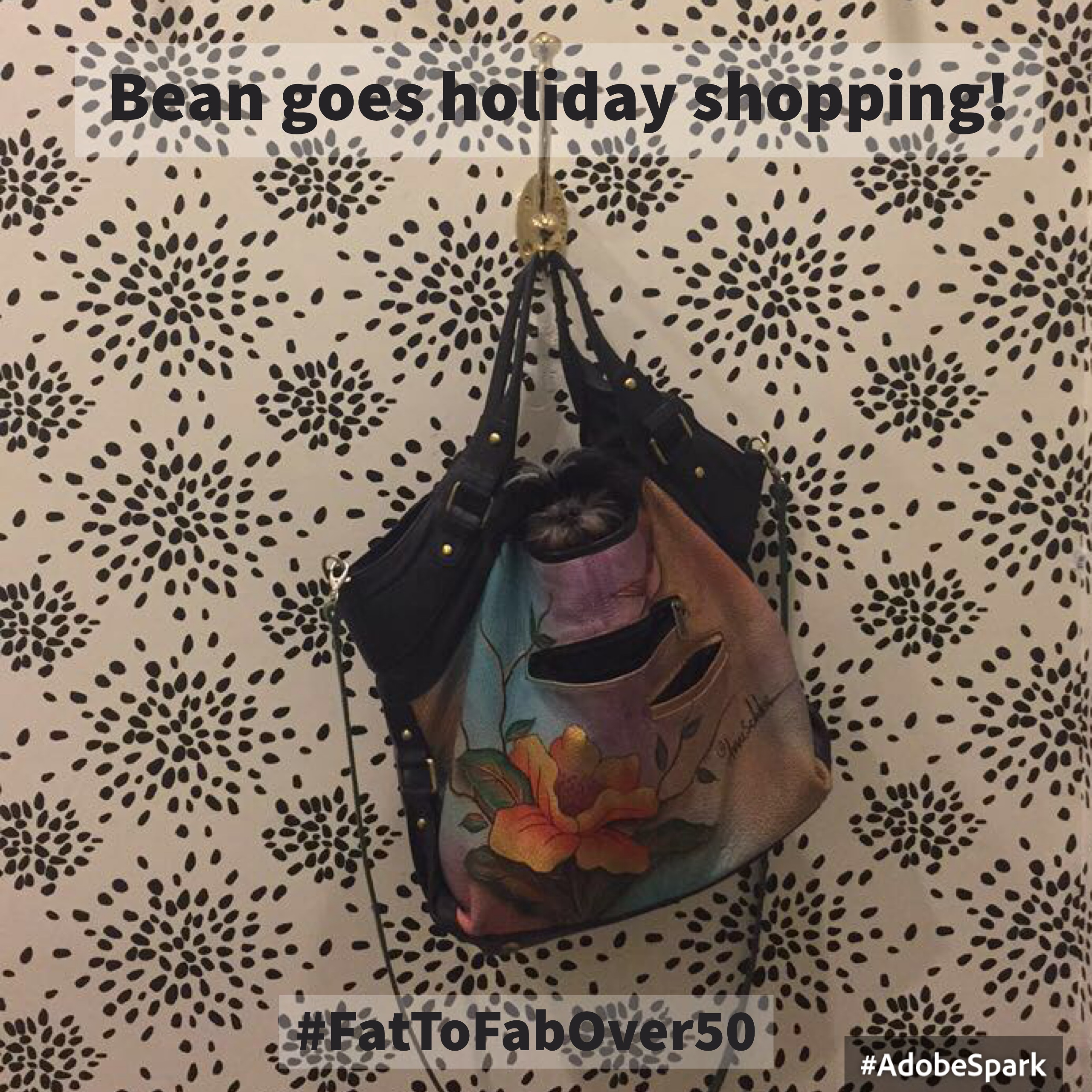 #fattofabover50 #bean #puppy #holidayshopping
